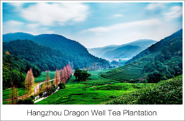 Dragon Well Tea Plantataion, Hangzhou